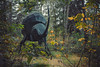 Gigant beatle (A.Dissing) Tags: gigant beatle insect forrest wood fall green yellow amazing awesome sony a7ii contrast black scene leafs skovsnogen animal art artistic nature red garden new