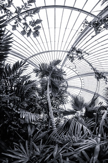 London - In The Palm House Of Kew Gardens