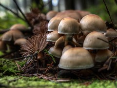 Herbst in Babelvenn (Skylark92) Tags: belgie belgium belgique ardennen ardennes forest babelvenn burg reuland burgreuland herfst autumn herbst funghi mushroom paddestoelen