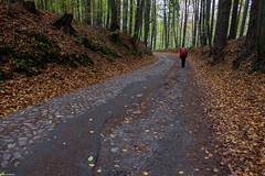 Ruppiner Landweg