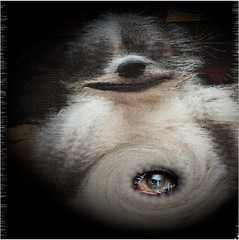 ailen martian dog mixef with monster (soniiiety) Tags: funny scary lol illusion hot sexy joke remake edit remix test photo