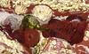anemones 5 (smallritual) Tags: caerfai wales beach seaanemone beadlet rockpool