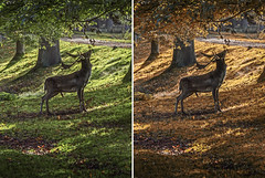 HAVING A NIBBLE (Des Hawley,) Tags: deshawley deer thegalaxyhalloffame over1000views
