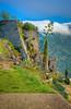 Klis Detail (William Horton Photography) Tags: adriatic centuryplant croatia dalmatia dalmatiancoast europe klisfortress split afternoon clouds fort fortree hilltop