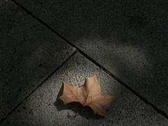 El comienzo de la sabiduría es el silencio. (elena m.d.) Tags: macrofotografia calle street sombra luz