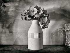 Still Life with Flowers (DarwinRobot) Tags: westsussex nymans penf flowers blackandwhite foundstilllife