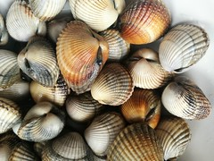 """cockles from walk fishing @  """"107 high tide (gerrygoal2008) Tags: cockles coques coquillages pêche pied maree grande bivalve coquillage seafood sea food ocean sand tide collect clam clams marescos"""