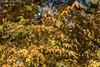 2017 281-365 Autumn Impressions (kayakingjanet) Tags: arboretum autumn multipleexposure westonbirt 2017365 astarterforten