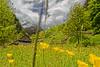 Valle Verzasca Wiese (karlheinz klingbeil) Tags: valleverzasca schweiz landschaft wiese blumen flower meadow berge gebirge