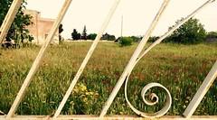 Happy place (Eleonora_Isabella) Tags: grass papaveri flowers campagna idilliaco vintage cancello
