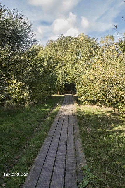 Katherine's Wood