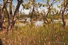 Harmony_7073 (Manni750) Tags: harmony harmonious nature trees tree water river swamp birds wildlife pelicans sky