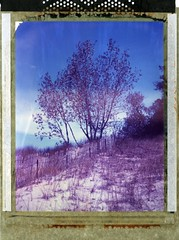(er_code_blue) Tags: polaroidweek instant expired film largeformat 59 polaroid crowngraphic graflex