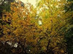 Tree (Anna Gelashvili) Tags: тбилиси дерево tree nutsubidzeplato tbilisi georgia ხე ნუცუბიძისპლატო თბილისი საქართველო ფოთლები leaf