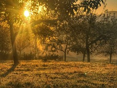 Morgens auf der Streuobstwiese (Blende2,8) Tags: germany herbstlandschaft autumn autumnlandscape nebel obstbäume rommelsbach reutlingen sonne wiese sonnenaufgang streuobstwiesen badenwürttemberg deutschland iphone