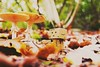 Danbo explore the world! (mirkoheinemann1) Tags: danbo forest mushroom autumn outside nature modell littleworld fotokreisgelsenkirchen nikon macro makro d5300
