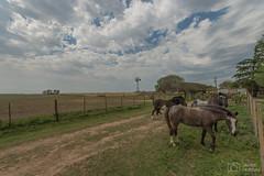 Dia de campo (..Javier Parigini) Tags: argentina cordoba generalroca campo caballos caballo gralroca nikon nikkor d4 1424mm f28 ave aves birdcampo javierparigini flickr