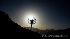 against the light (fx_photo1) Tags: pusteblume flower dandelion soffione