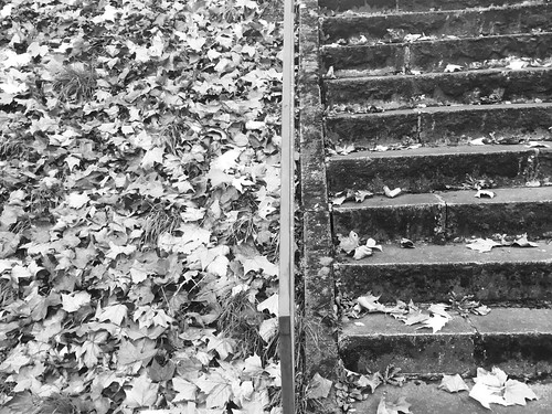 leaves & stairs