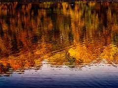 Autumn Reflections (Silke Klimesch) Tags: 7dwf saturdayslandscapes berlin schlachtensee zehlendorf deutschland germany autumn fall reflections lake water herbst goldeneroktober spiegelung reflexion automne reflet rispecchiamento autunno otoño reflejo outono reflexo toamnă toamnăaurie φθινόπωρο sonbahar осенний 秋季 olympus omd em5 mzuikodigitaled60mm128macro microfourthirds nikcollection duck ente canard cof018dmnq cof018viri cof018mark cof018cher cof018ally cof018biz