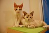 Jordan and Angel (Cathy Niland Cat Photos) Tags: adrian angel fkp jordan