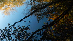 October Late Summer III (offroadsound) Tags: october reflection watersurfacereflection blue blues