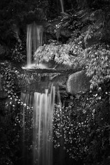 Cycle of life (PeterThoeny) Tags: saratoga california siliconvalley sanfranciscobay sanfranciscobayarea hakonegardens park garden japanesegarden water waterfall monochrome blackandwhite sony sonya7 a7 a7ii a7mii alpha7mii ilce7m2 fullframe vintagelens dreamlens canon50mmf095 canon 1xp raw photomatix hdr qualityhdr qualityhdrphotography fav200