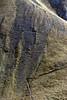 Tracce (Claudio Ghizzo) Tags: steinbock capraibex stambecco stambecchi dolomitibellunesi nikon d7100 natura wildlife wildlifephoto naturalisticphoto fotografianaturalistica altamontagna lunghecorna tracce trail trails