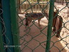 22-Niamey Hayvanat Bahçesi (18) (www.gonulluler.org) Tags: 2009 afrika africa nijer niger türk turkish dernek association stk ngo gönüllüler volunteers biseg yardım aid relief hayvan animal zoo