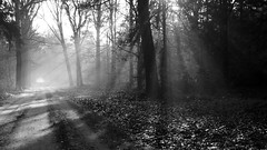 Rays Of Light (Visual Stripes) Tags: rays light sun fog landscape 50mm blackandwhite composition forest nature path mist tree road wood trail sky grass