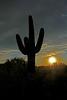 Sun and Cactus (craigsanders429) Tags: sunset sunsets sunsetphotography cactus arizona saguarocactus clouds cloudsandsky cloudsandsun tucsonarizona desert sonorandesert plants sky sunsetcolors