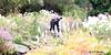 REFORD GARDENS      |  THE LONG WALK  |  ALLEE ROYALE |    REFORD GARDENS  |   LES JARDINS DE METIS  |  METIS   |  GASPESIE  |  QUEBEC  |  CANADA (J.P. Gosselin) Tags: reford gardens | the long walk allee royale les jardins de metis gaspesie quebec canada 5 canon7dmarkii canon 7dmarkii 7d markii mark ii canoneosrebelt2i canoneos7d canon7d eos7d canoneos eos rebel t2i ph:camera=canon ngc