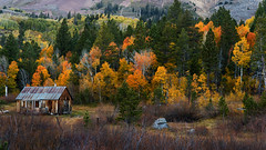 Fall Colors at Hope Valley (Middle aged Nikonite) Tags: hope valley california nikon d750 forest trees fall colors autumn outdoor landscape rustic cabin vibrant mountain