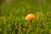 There's Gnome Place like Home! (Jay Bees Pics) Tags: fungi mushroom mycology autumn longshaw longshawestate nt nationaltrust derbyshire 2017 ngc npc coth coth5