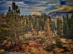 The Living and the Dying (lindayaecker) Tags: touristattractions yosemitesights autumn cloudyskies mountainscapes dyeingtrees trees
