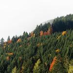 Autumn Fog thumbnail