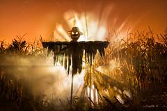 Lord of the Corn. (darklogan1) Tags: scarecrow corn fog halloween sonyilce7rm2 canonef1635mmf4l metabones orange madrid spain logan darklogan1 lightpainting comic crops harvest dramatic sony creepy fogmachine