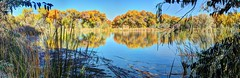partial view bosque pond (JoelDeluxe) Tags: tingley beach abq bosque albuquerque dukecity nm newmexico biopark ponds fall colors red orange yellow green blue ducks wildlife fishing recreation landscape panorama hdr joeldeluxe