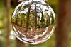 Crystal Ball (Geoff Henson) Tags: crystalball glass sphere woods trees autumn inverted leaves 1000v40f