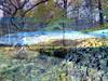 Ardinning_Autumn_sub_0007 (troutcolor) Tags: imagemagick subtract autumn ardinning