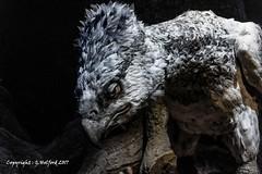 Harry Potter Hypogriff (Holfo) Tags: harrypotter hypogriff studios character book film uk nikon d750 animal