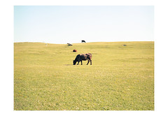 (harald wawrzyniak) Tags: analogue analog film scan kodak portra cow nature landsape ireland irland eire êire haraldwawrzyniak harald wawrzyniak 120mm mediumformat 2016 photography