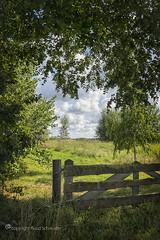 Summer memories (Ruud.) Tags: ruudschreuder fe 2870mm f3556 oss sony7m2 sony sony7 alfa alpha alpha7 sonyalfa sonyalpha ilce7m2 sonyalphadslr noordbrabant brabant roosendaal haiink brabantslandschap northbrabant netherlands landschap landscape paysage nederland holland niederlanden paybas holanda hollandslandschap dutchlandscape boom bomen tree trees baum baume arbre