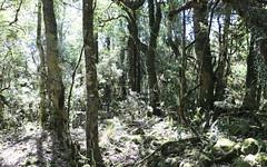 Rock Felt Fern (Pyrrosia rupestris) (Poytr) Tags: mountroyalnsw worldheritagesite singletonnsw singleton arfp nswrfp qrfp forest rainforest pyrrosia pyrrosiarupestris polypodiaceae arffern warmtemperatearf temperaraterainforest doryphorasassafras goldensassafras barringtontops barringtontopsnationalpark wood tree sicklefern pellaeafalcata