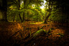 Zen Zone (Augmented Reality Images (Getty Contributor)) Tags: woodland countryside perthshire landscape leefilters trees nature scotland afternoon sunshine longexposure canon leaves forest light forgandenny unitedkingdom gb