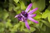 Five (Alexander Jones - Documentary Photography) Tags: documentary flower flora photography macro gardens nikon d5200 close up botanical city ciutadella menorca spain espana minorca europe