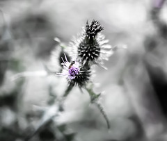 dream (I was blind now I see!) Tags: flower bee botanical art bleached bokeh
