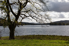 Ash tree beside Esthwaite Water (Keith in Exeter) Tags: ash tree bare leafless esthwaite water lake lakedistrict nationalpark cumbria england cloudy sky grey grass field woodlan landscape autumn outdoor explore