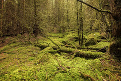 Mossy Forest Floor (Click And Pray) Tags: managedbyclickandpraysflickrmanagr forest scotland argyll ardentinny glenfinart trees landscape horizontal treetrunk mossy forestscotlandargyllardentinnyglenfinarttreeslandscapehorizontaltreetrunkmossygbr