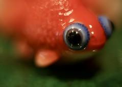 .5 Pisces (dougwest403) Tags: zodiac macromondays pisces